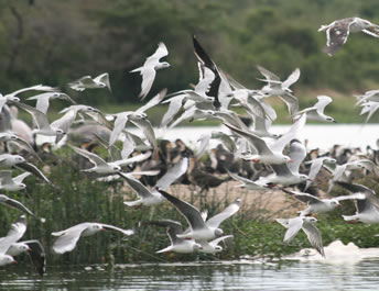 Birds at the Kazinga Channel