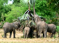 Elephants - Favourite to Uganda Big Five Safari Enthusiasts